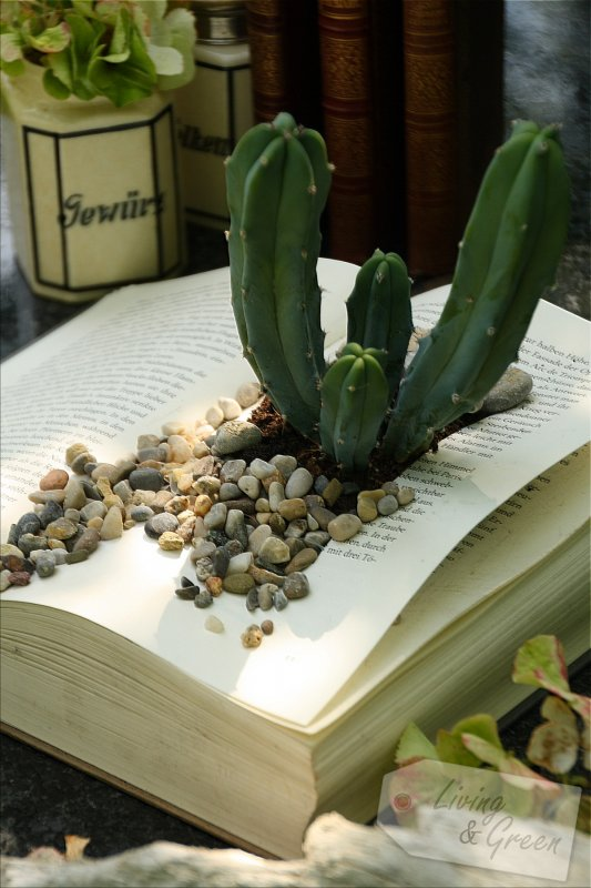 Blickfang *Book Planter DIY* - Book Planter DIY