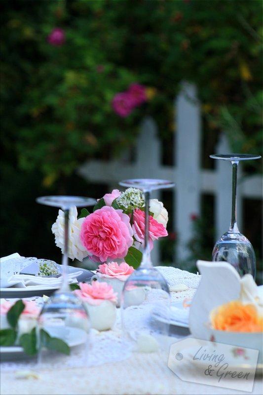 frischk se semifreddo mit marillen und rosen living green. Black Bedroom Furniture Sets. Home Design Ideas